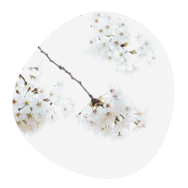 image décorative représentant une branche de cerisier